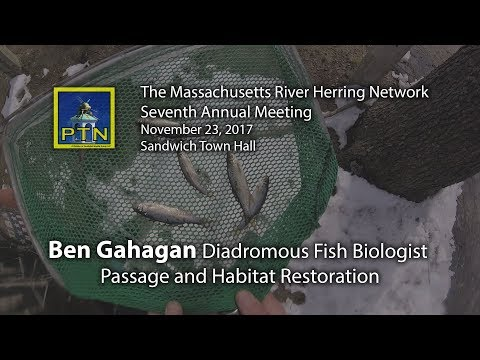 Ben Gahagan MA DMF Massachusetts River Herring Network