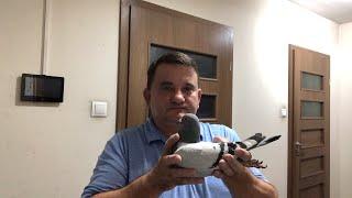 (NA ŻYWO) Merwe Peter gołębie sprzedane do Ameryki - USA pasmo sukcesów Artur Pawelec