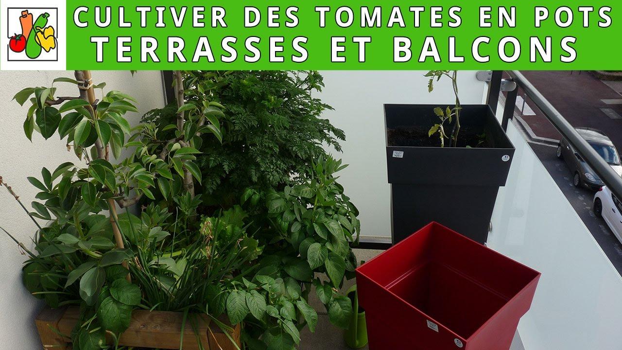Planter Des Tomates En Pot cultiver des tomates en pots