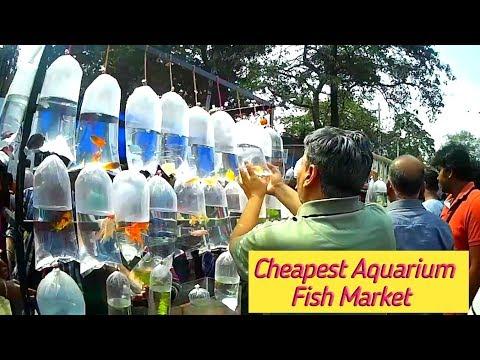 Galiff street aquarium fish market kolkata || Gallif street fish