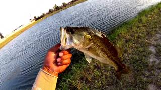 Big Bite Baits (finesse Worm) & Yum ( Wooly Bug) Bass Fishing In Houston.