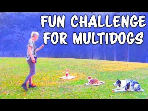 Begining training multiple dogs name discrimination - professional dog training
