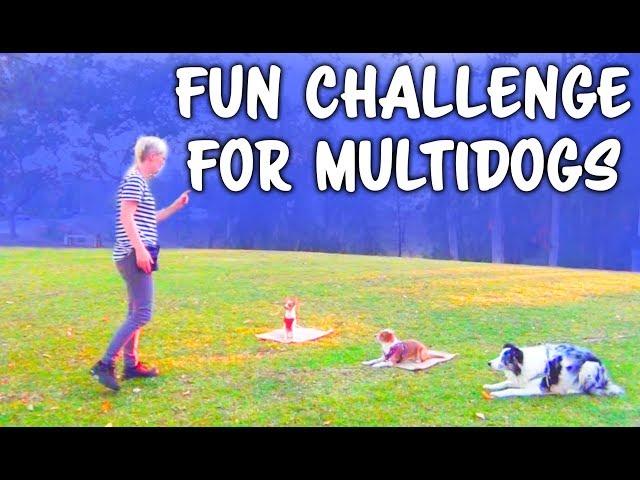 Begining training multiple dogs name discrimination - professional dog training