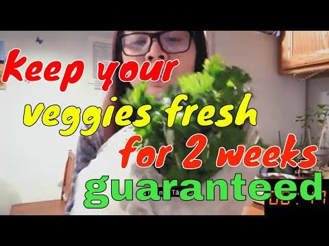2med-|-day-41-|-how-to-keep-your-green-fresh-longer