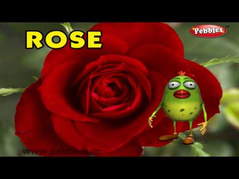 Rose Rhyme | 3D Nursery Rhymes With Lyrics For Kids | Flower Rhymes | 3D Rhymes Animation