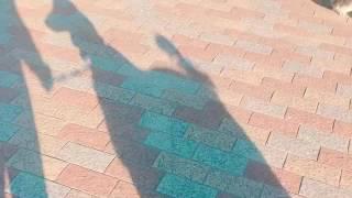 ジャズちゃんとディーバちゃんが大阪城に行きました^^*