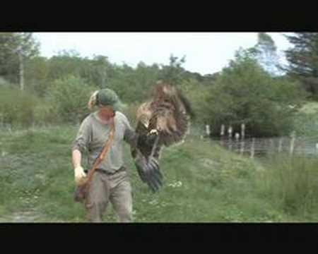 Imperial eagle Eagleworld Denmark