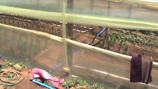 Riego por cinta exudante  en invernadero de flores y hortalizas PRODEMU-INDAP