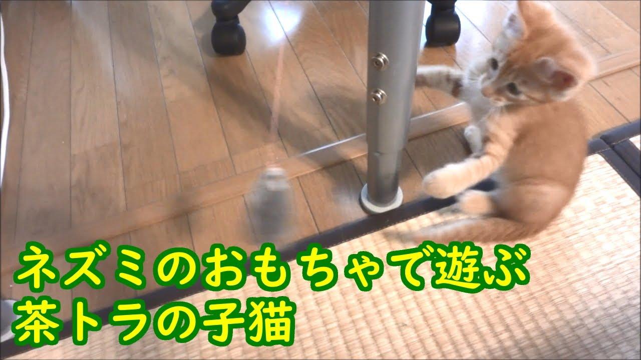 ネズミのおもちゃで遊ぶ茶トラの子猫【茶トラ猫カンタの子猫時代】