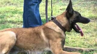 Dog Training Jacksonville Fl