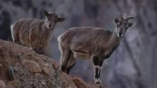 Great Himalayan National Park _Pride of Himachal Pradesh