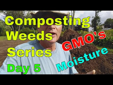 Composting Weeds Series August 24th 2017, Composting Questions, Moisture, GMO's