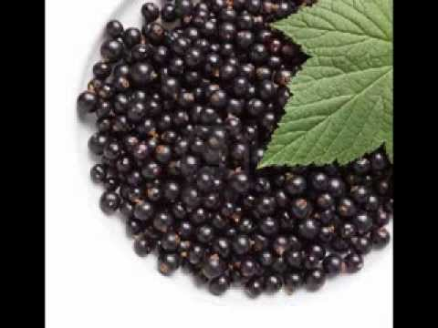Black Currant Benefits Fruits Vegetables