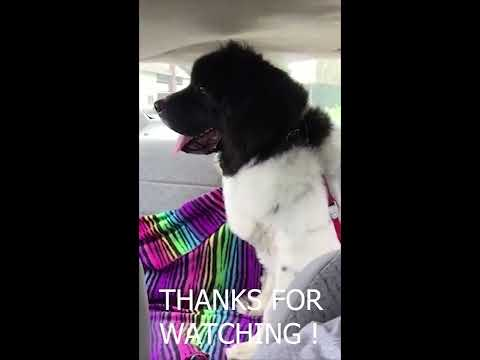 PUPPY POWER !! Meet my DOG 🐶