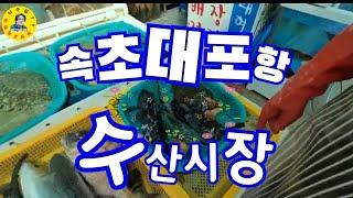 속초 대포항 수산시장 수산물시세 모조리 공개♡0464