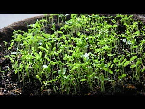 Рассада помидор - выращивание из 23
