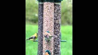 Duncraft Triple Tube Bird Feeder