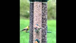 Duncraft Triple Tube Bird Feeder
