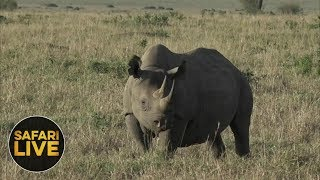 safariLIVE - Sunrise Safari - November 13, 2018