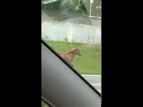A second YouTube video shows a galloping horse on Interstate 684.