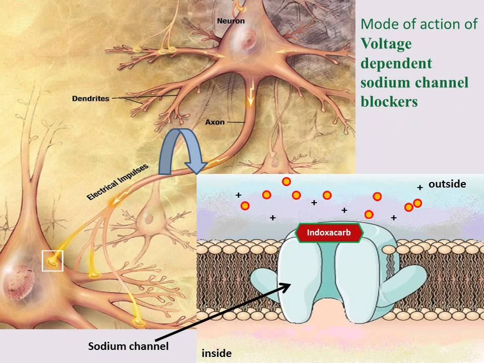 MODE OF ACTION OF INSECTICIDES