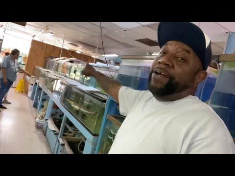 BUYING EXOTIC FISH FROM CREEPY ABANDONED FISH STORE, YIKES!