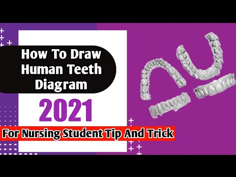 How Draw Teeth Diagram Youtube