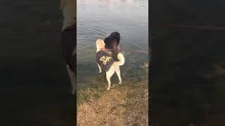 My Dog Zex
