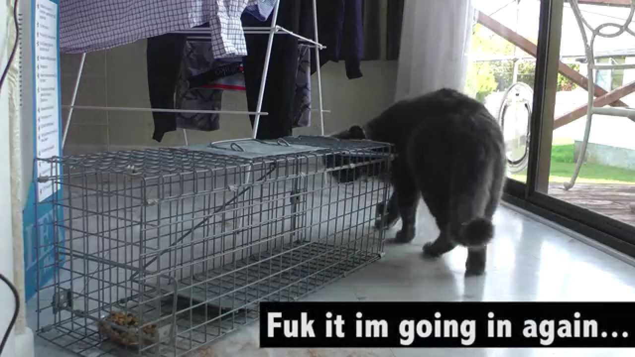 How To Stop Neighbours Cat Coming In My House