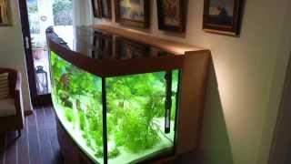 Diskus Aquarium Peter Lübbke