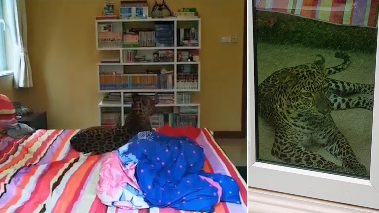 Couple Anger New Neighbours With Their Pet Leopard
