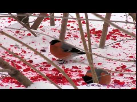 Песню Красная Рябина