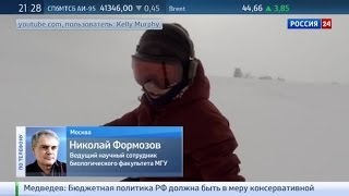 Медведь на склоне: кто гнался за сноубордисткой?
