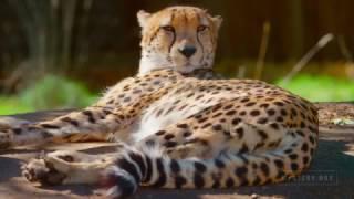 Video 4K ULTRA HD Красивое видео, животные и природа
