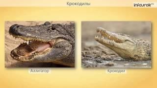"""Видеоурок """"Многообразие пресмыкающихся"""""""