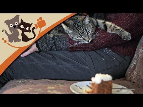 Das Katzencafé Köln