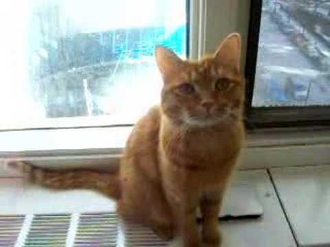Ralphy Cat Talking Doovi