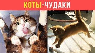 Приколы с котами. КОТЫ-ЧУДАКИ | Мемозг #97