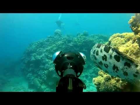 Revealing World Heritage Marine Sites on World Oceans Day
