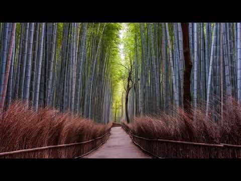 Path | Chill Mix