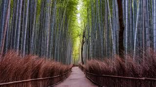Path   Beautiful Chill Music Mix