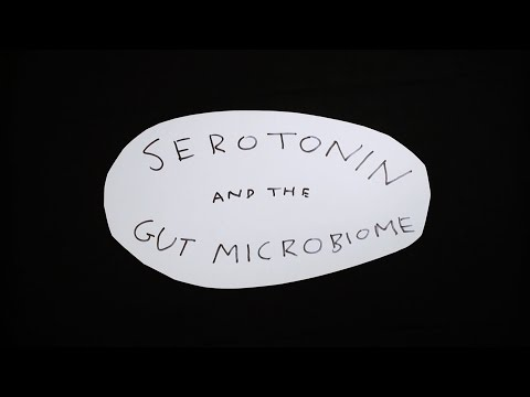 How Your Gut Bacteria Affect Your Serotonin Levels