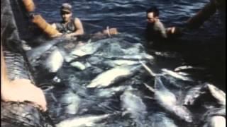 13 1970 Живое море - Подводная одиссея команды Кусто