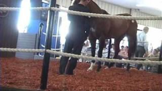 $16 Million Horse