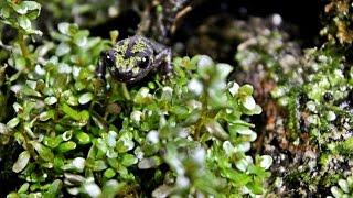 live planted vivariums marbled newt tokyo salamander tanks hd
