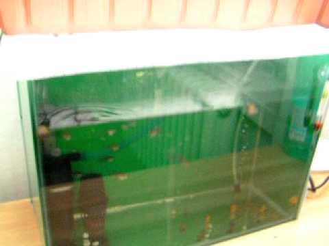 Aquaponics small scale aquaponic system youtube for Aquarium heizung