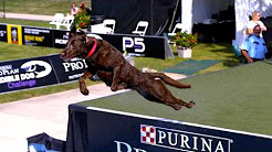 Purina® Pro Plan® Incredible Dog Challenge® - Dog Agility Event with Devin Super Tramp