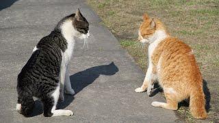 台湾の猴硐猫村にて、猫の喧嘩に遭遇しました。