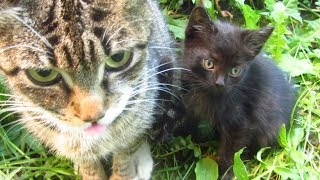New five kittens with mother cat
