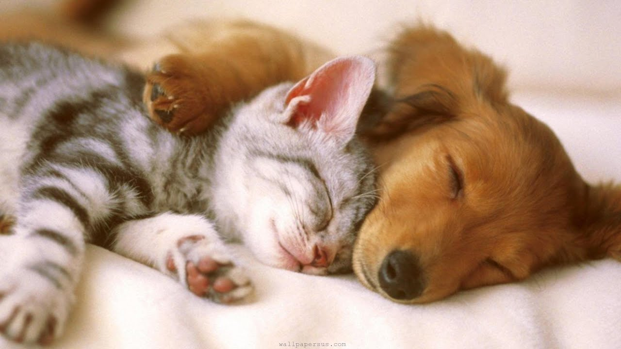 20  Best Of Adorable Puppies and Kittens
